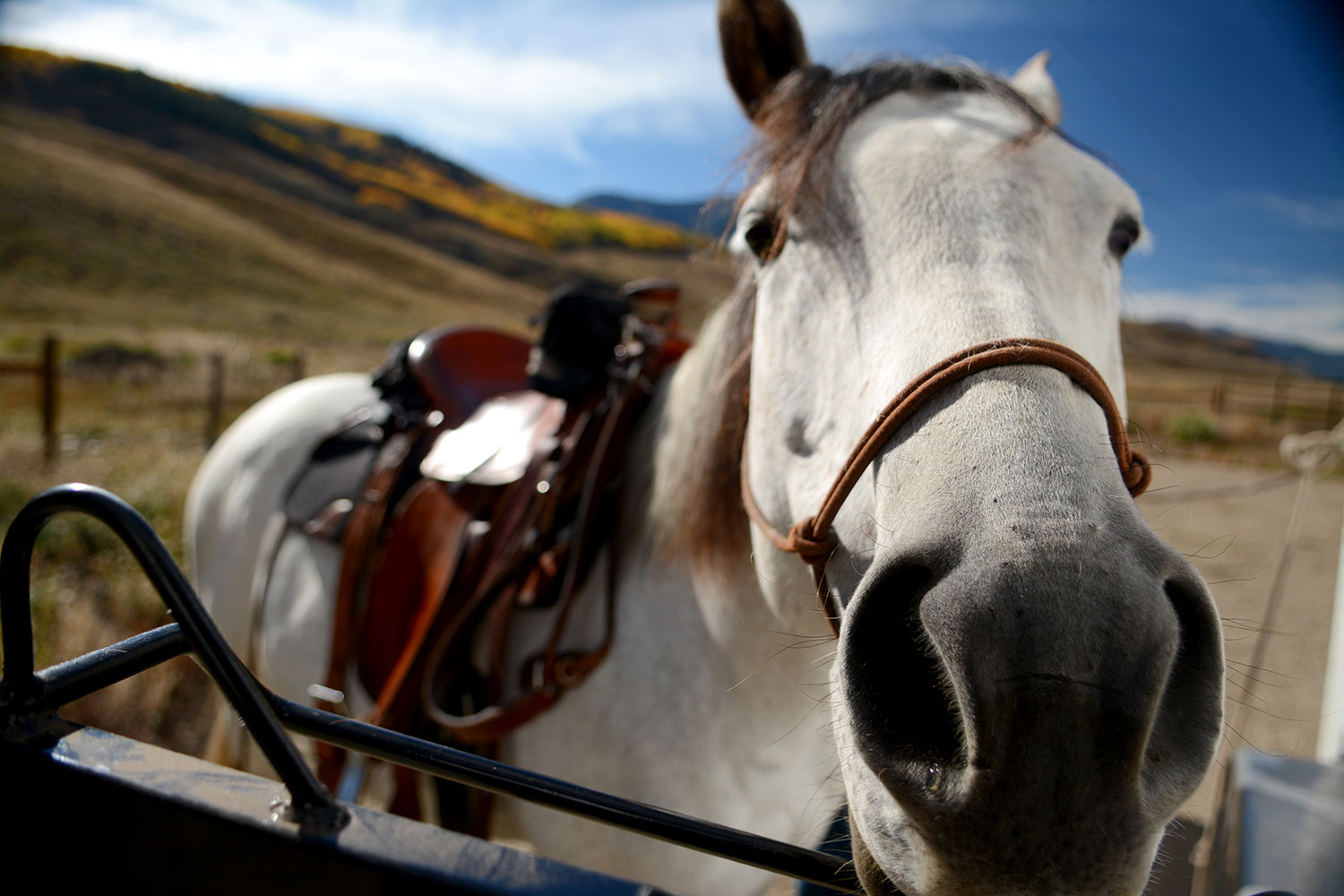 Crested-Butte-Horse-Park-4